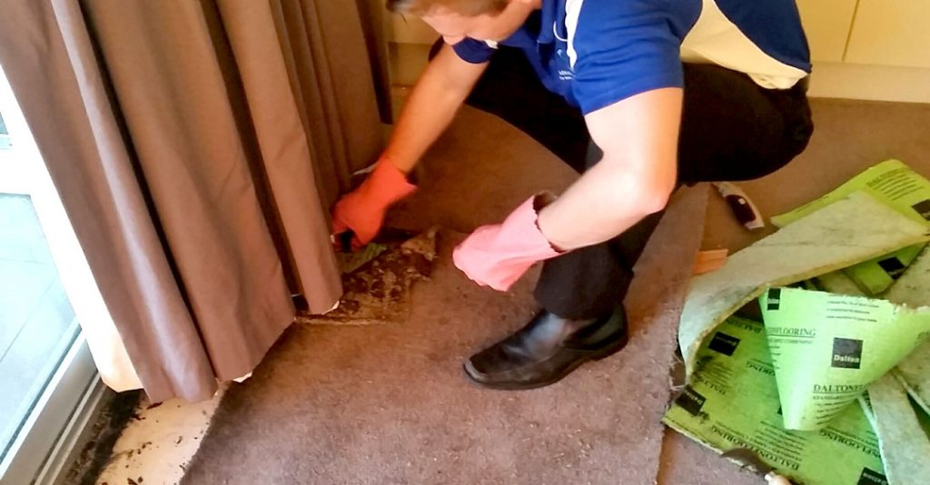 About Adelaide Carpet Fresh the water damage restoration experts