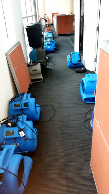 Water restoration - Adelaide Carpet Fresh - no job too big or small