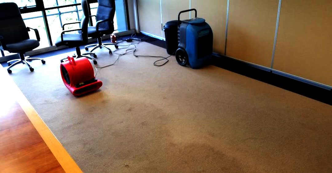 Water Damaged Carpet with certified experts - Adelaide Carpet Fresh