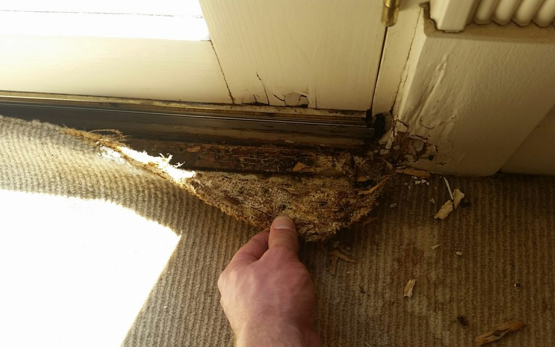 5 Signs That You May Have Mould In Your Carpet